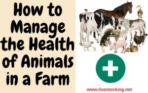 How to Manage the Health of Animals in a Farm