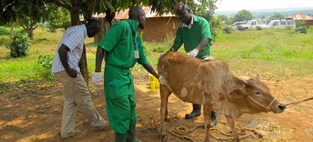 Health Management in Livestock Production