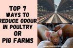 Top 7 Ways to Reduce Odour in Poultry or Pig Farms