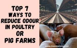 Reduce Odour in Poultry or Pig Farms
