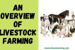 Livestock Farming – Definition, Benefits and Types