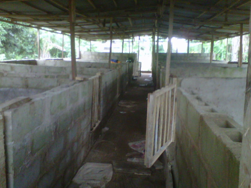 Building A Pig House: Siting And Preliminary Considerations