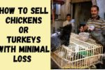 How to Sell Chickens or Turkeys with Minimal Loss