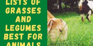 Lists of Forage Grasses and Legumes for Animals