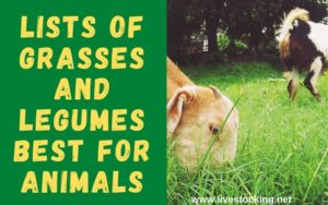 Lists of grasses and legumes best for animals