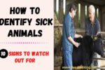 How to Identify Sick Animals: 10 Signs to Watch Out For