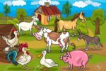 12 Tips to Increase Productivity on Your Livestock Farm