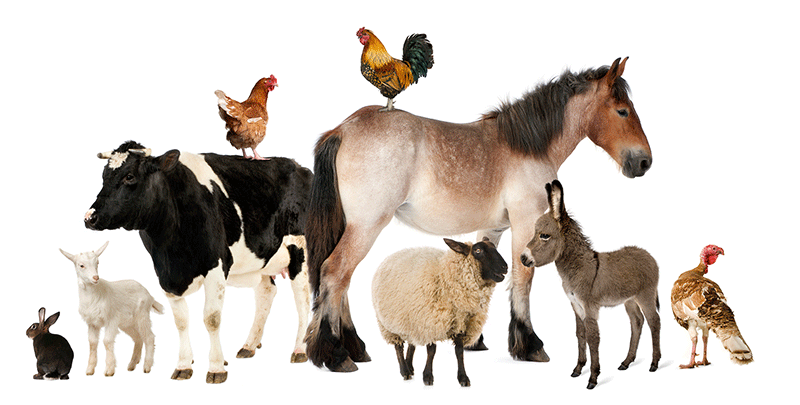 Signs of Good Health & Ill Health in Farm Animals