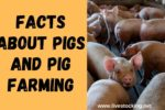 10 Facts about Pigs and Pig Farming