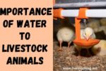 The Importance of Water to Livestock Animals