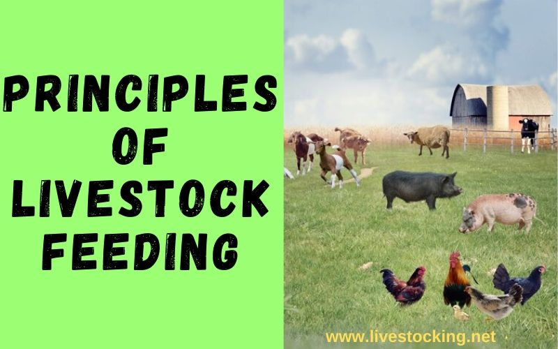 Principles of Livestock Feeding and Nutrition