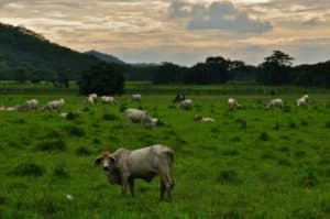 a pastureland for grazing