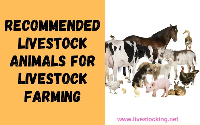 4 Recommended Livestock Animals for Livestock Farming