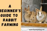 A Beginner's Guide to Rabbit Farming [Free Ebook Included]