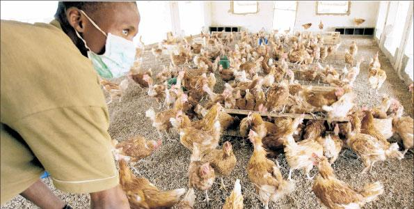 Making Money From Poultry: Exploiting Its Potentials