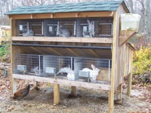 Rabbit cage or hutch