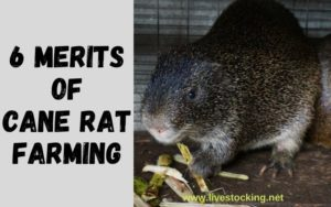 6 Merits of Cane Rat Farming
