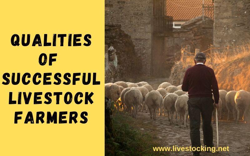 7 Qualities of Successful Livestock Farmers