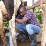committed dairy farmer