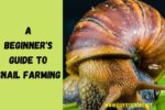 A Beginner's Guide to Snail Farming + eBook