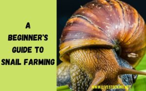 Guide to Snail Farming