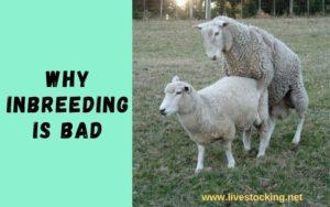 Reasons Why Inbreeding i