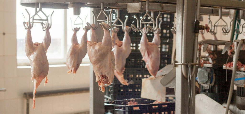 chicken meat processing