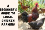 A Beginner's Guide to Local Chicken Farming + eBook