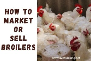 How to Market or Sell Your Broilers