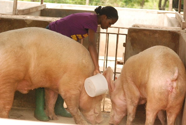Nutritional Requirements of Pig