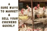 6 SURE Ways to Market & Sell Chickens Quickly