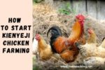 How to Start Kienyeji Chicken Farming