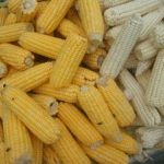 white and yellow maize
