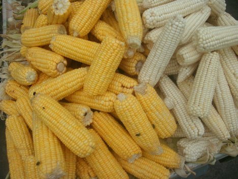 Nutritional Difference Between White and Yellow Maize