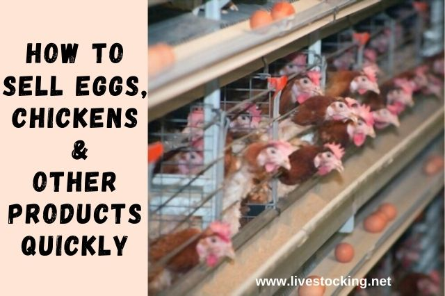 How to Sell Eggs, Chickens & Other Products Quickly