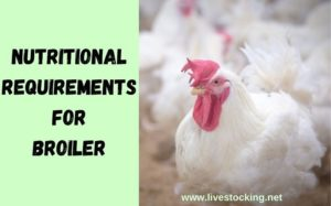 Nutritional Requirements for Broiler