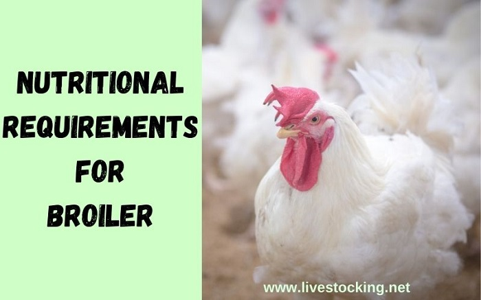 Nutritional Requirements of Broilers