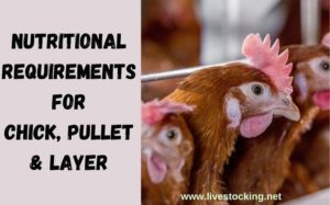 Nutritional Requirements for Layer