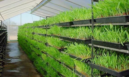 What is Hydroponic Fodder & How Can It Be Grown?