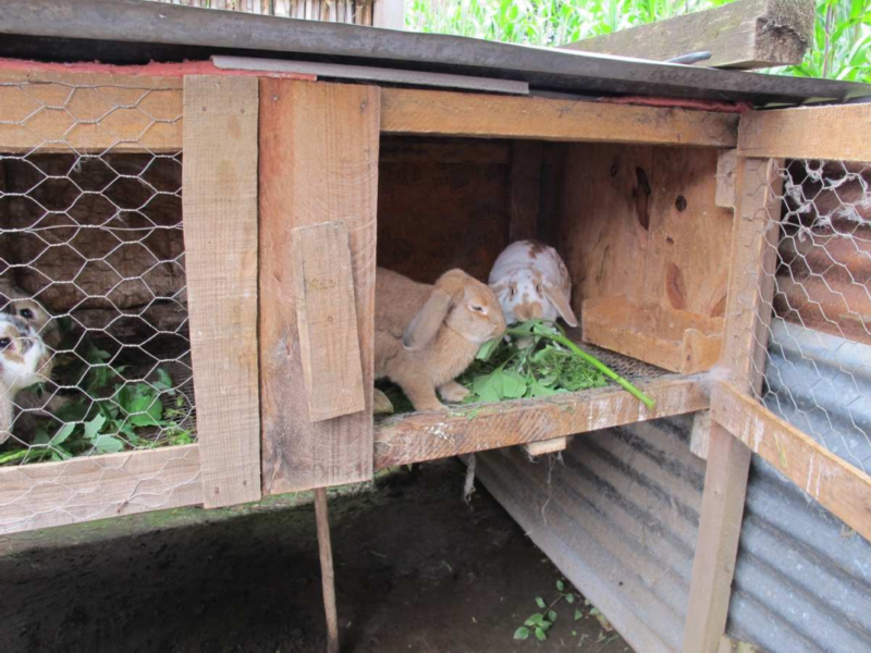 How to Build a Local Rabbit Cage or Hutch
