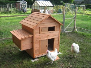 4 Questions To Ask Before Building Chicken Coops