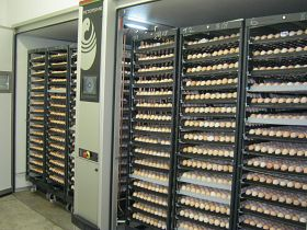 How to Start a Hatchery Business