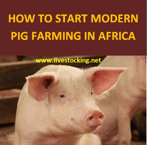 How to Start Modern Pig Farming in Africa