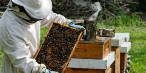 A Beginner's Guide to Beekeeping [Apiculture] + Ebook