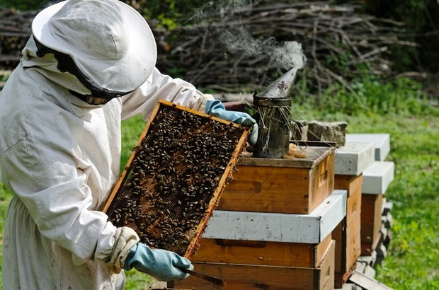 How to Start Bee Keeping in Tropical Areas
