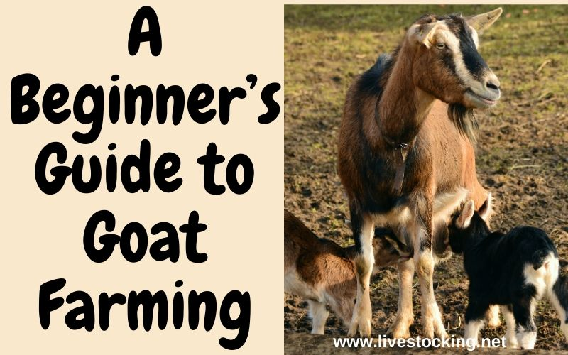 A Beginner's Guide to Goat Farming + Free eBook