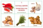 5 Common Organic Growth Boosters for Chickens