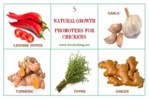 Natural Growth Promoters for Chickens