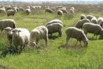A Beginner's Guide to Sheep Farming