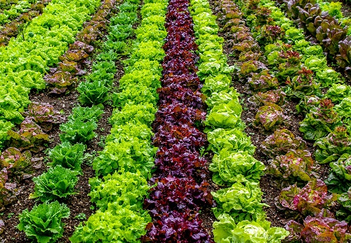 Vegetation Indices: How to Use Them in Farming